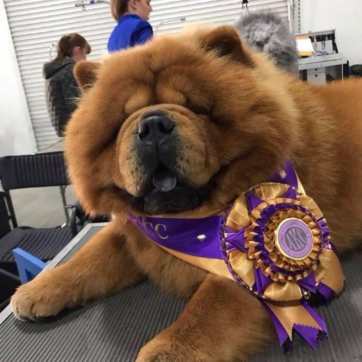 dog seven