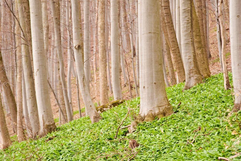 Tree Services Des moines