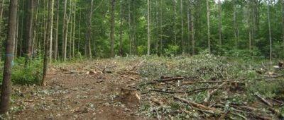 tree service springfield