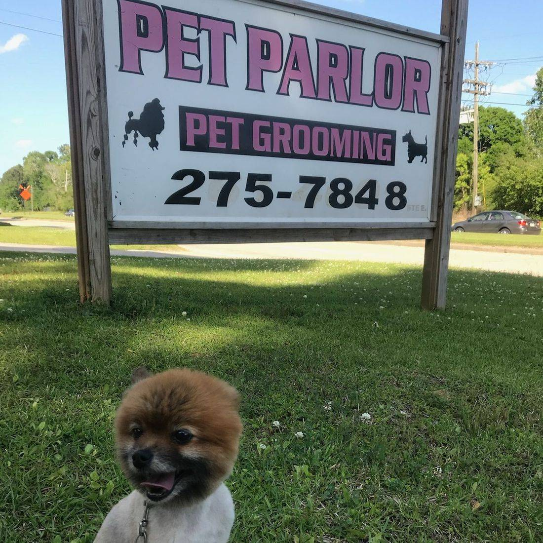 Pet Parlor Pet Grooming Sign With Pom