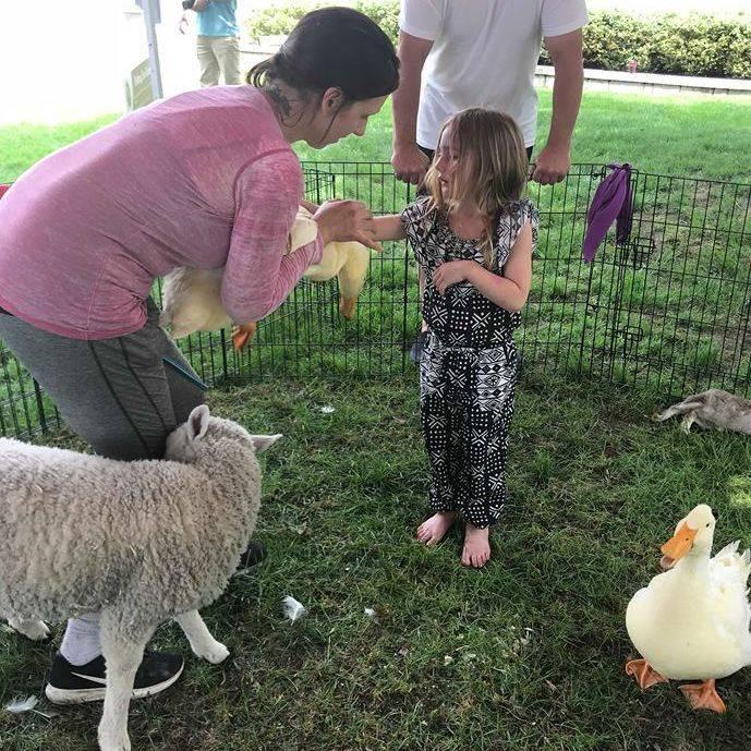 Sheep in petting zoo