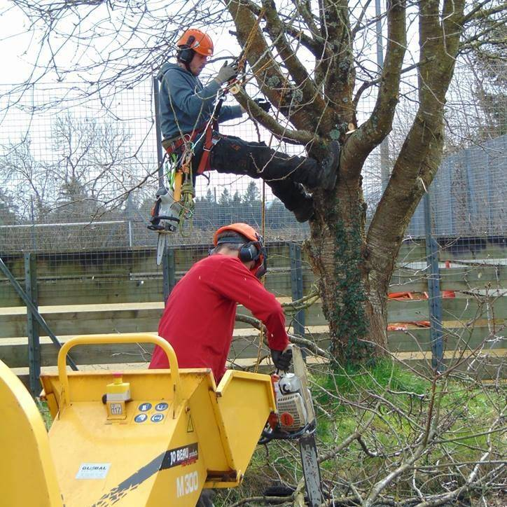 Chainsaw and Chipper, Tree Work