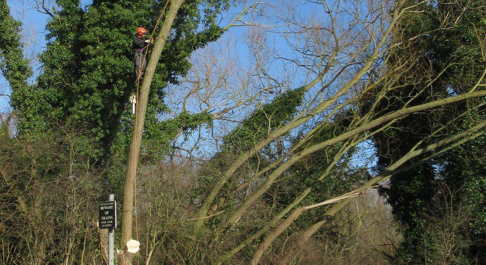 A1 Arborist working at Railworld Peterborough UK