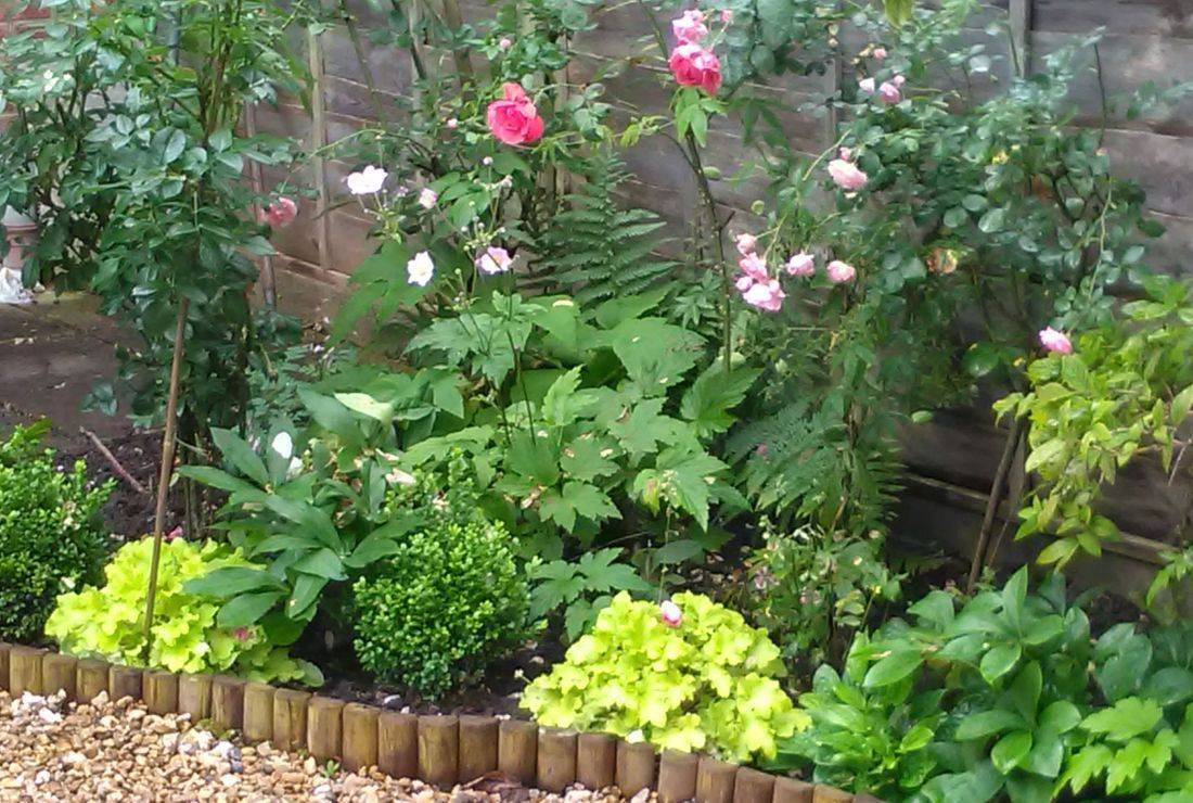 roses box heuchera anemone hellebore