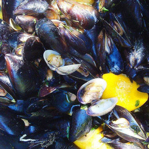 steamed clams and mussels