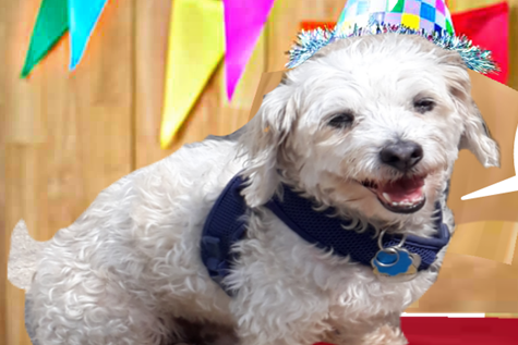Duke Z Dog is our top dog. We love your dogs like our own in day care, walks, boarding, and puppy dog birthday parties.