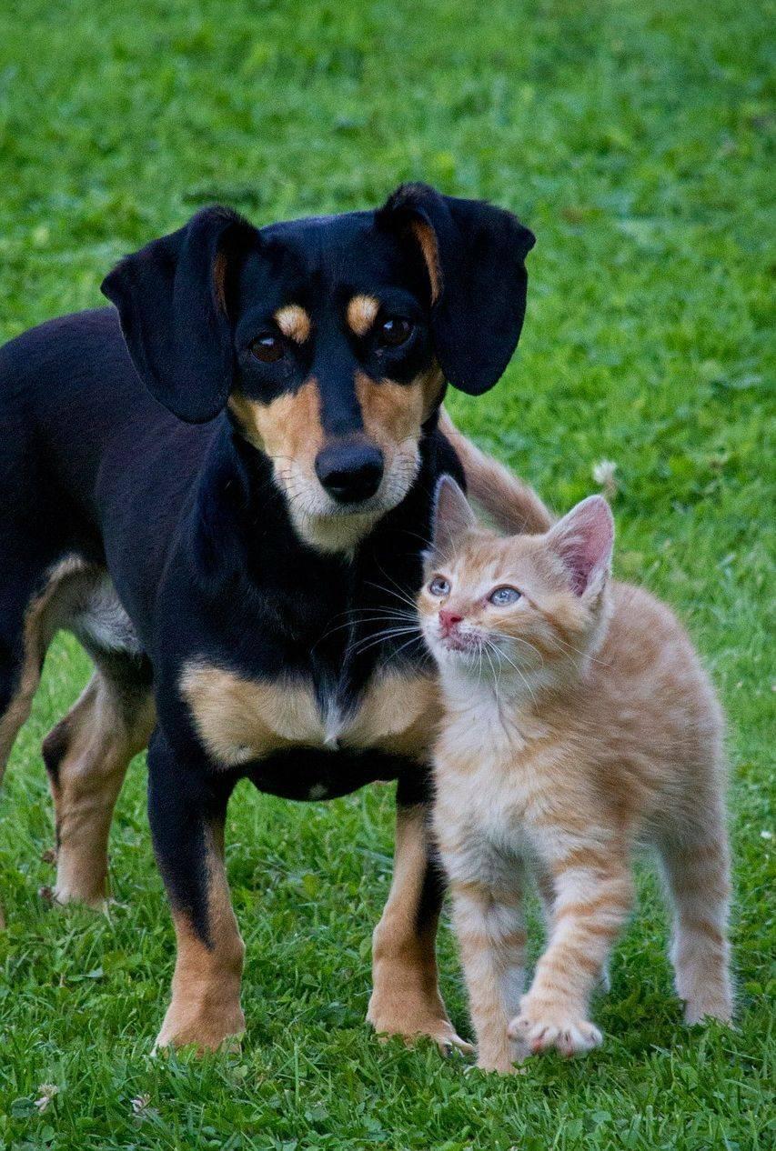 Hund und Katze begegnen sich freundlich