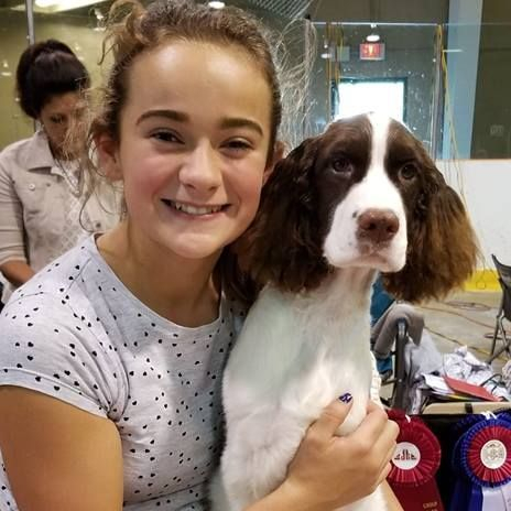 junior handler english springer spaniel breeder