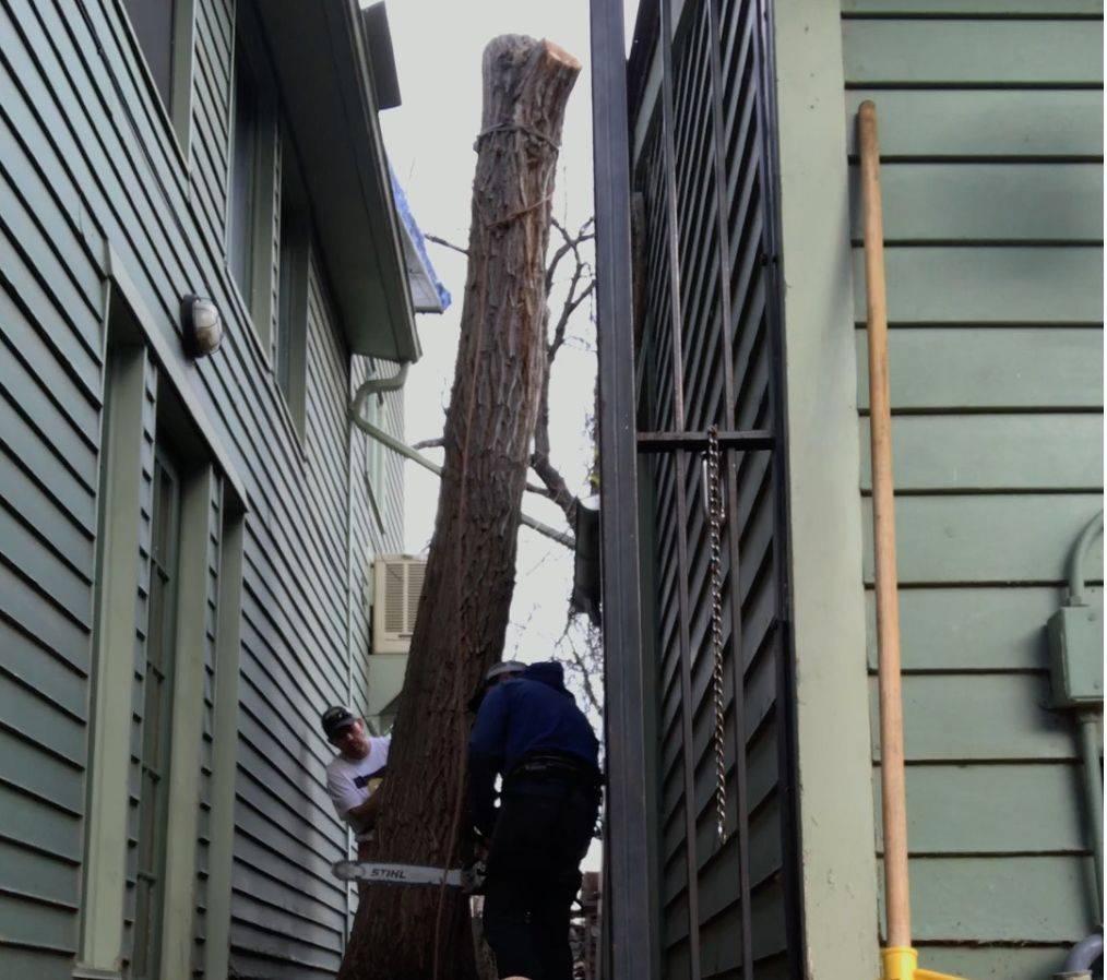 Boulder tree removal