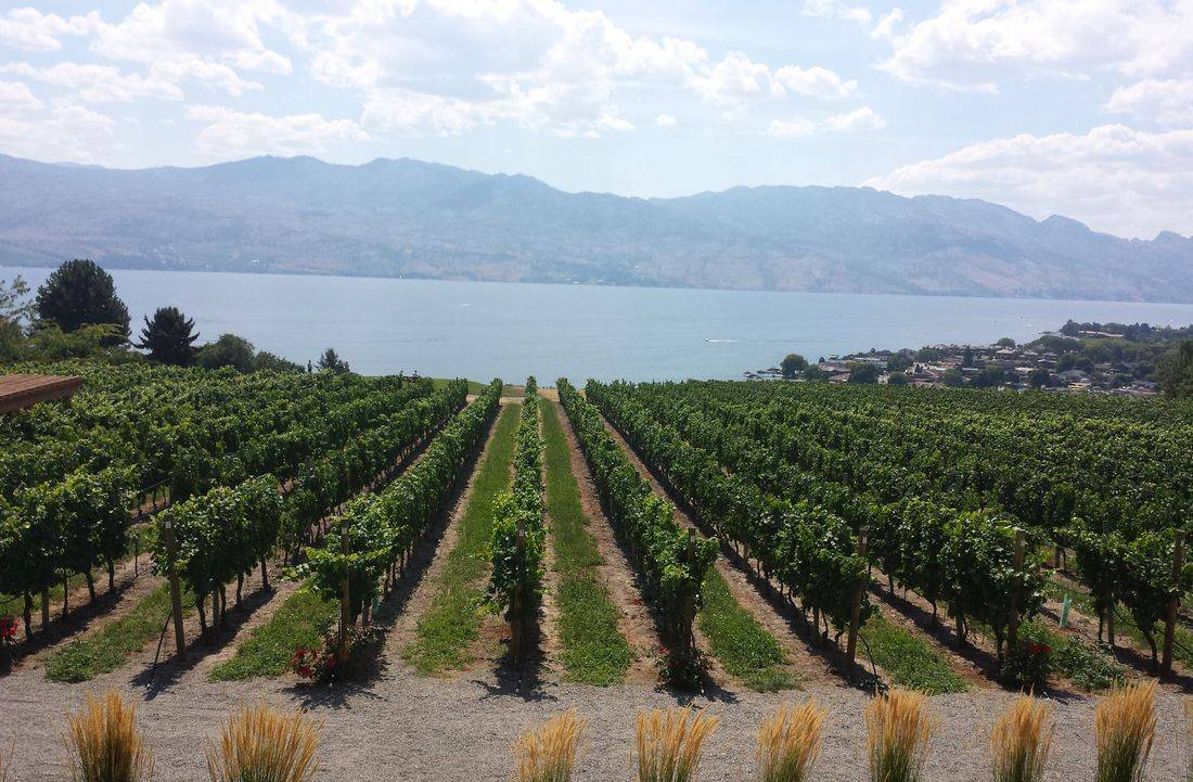Book a Kelowna Wine Tour