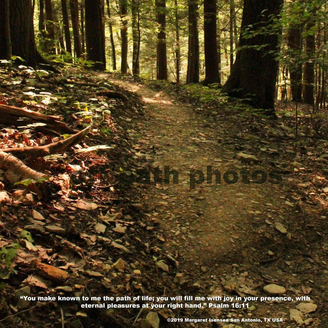 photography, forest, trees, nature, scripture, God, light, pathway, summer, relaxing