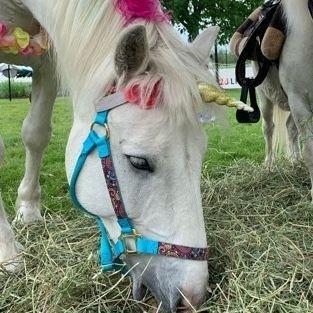 white unicorn pony