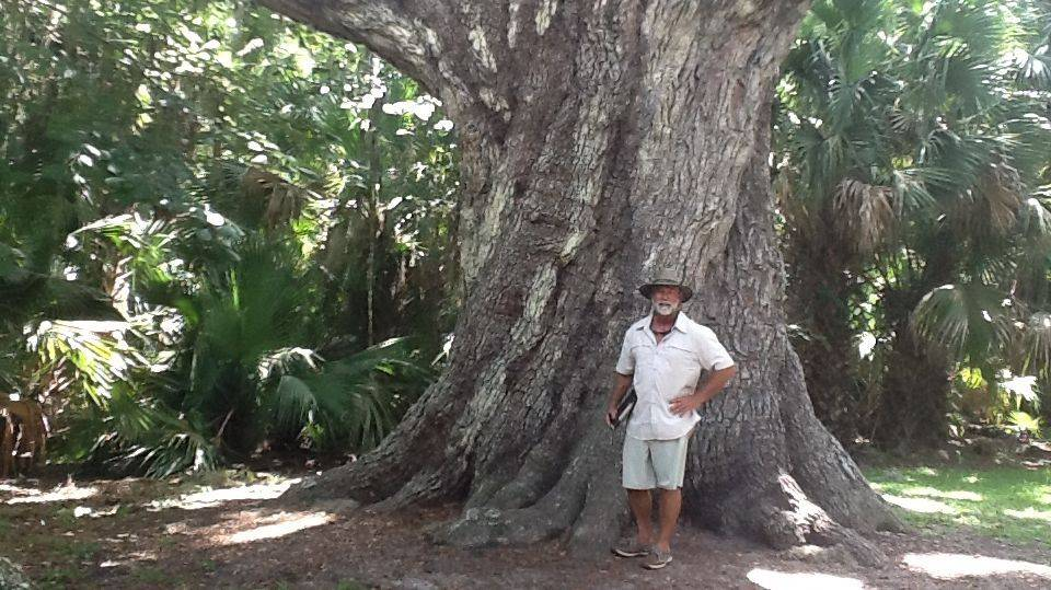 Graham Orr - The Tree MD - ISA Certified Arborist