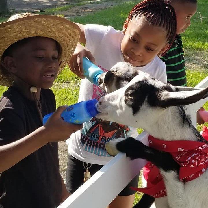 children bottle feeding a goat