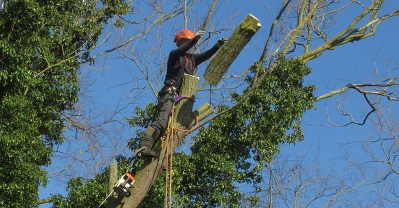 A1 Arborist Tree Work sectional dismantling felling  in Peterborough UK