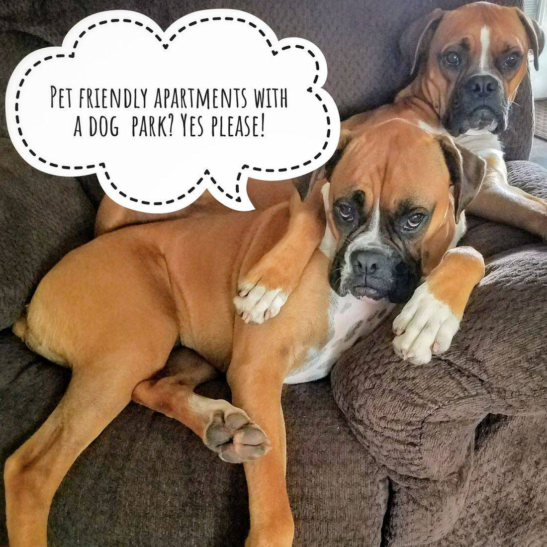 image of 2 boxer dogs, words in a bubble, pet friendly apartments, apartments with pet park