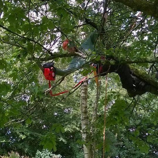 Tree surgery work