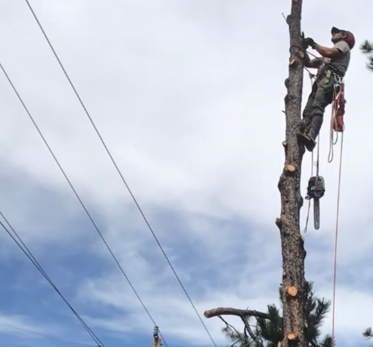 Nederland tree removal