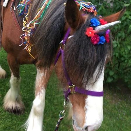 Clydesdale horse wearing a unicorn horn