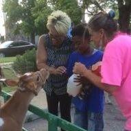 People feeding a calf