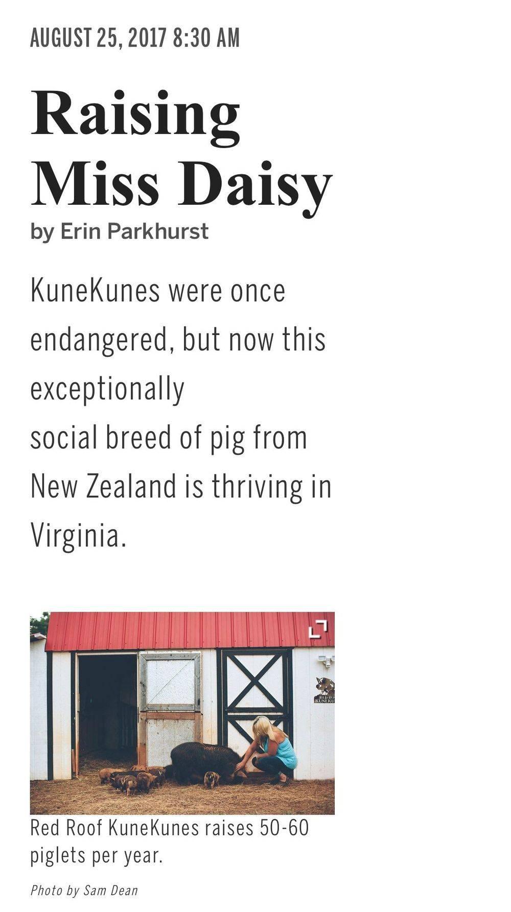 Red Roof KuneKune breeder KuneKunes for sale