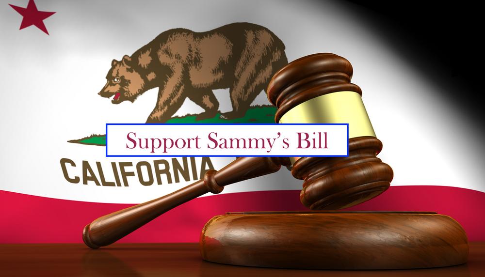 Sammys bill