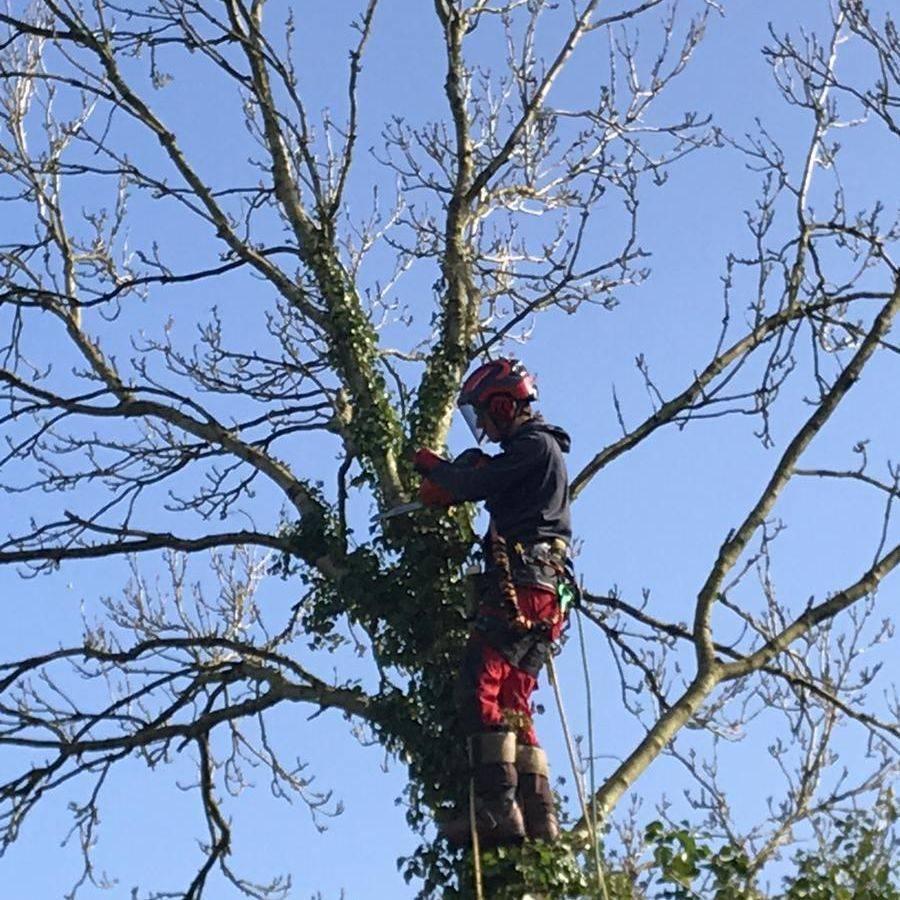 Tree Surgeon Bideford