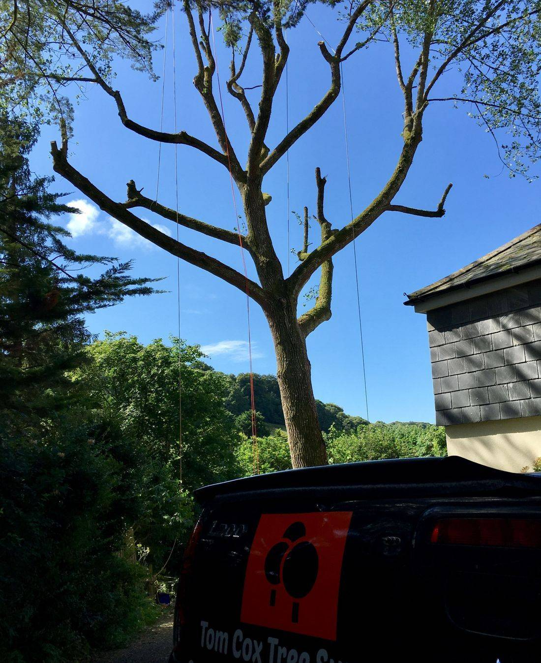 Large tree felling and Removal