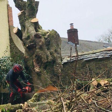 Tree Surgeon Barnstaple