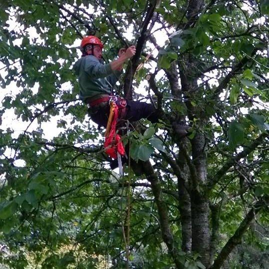 Andy winsbury tree work climbing
