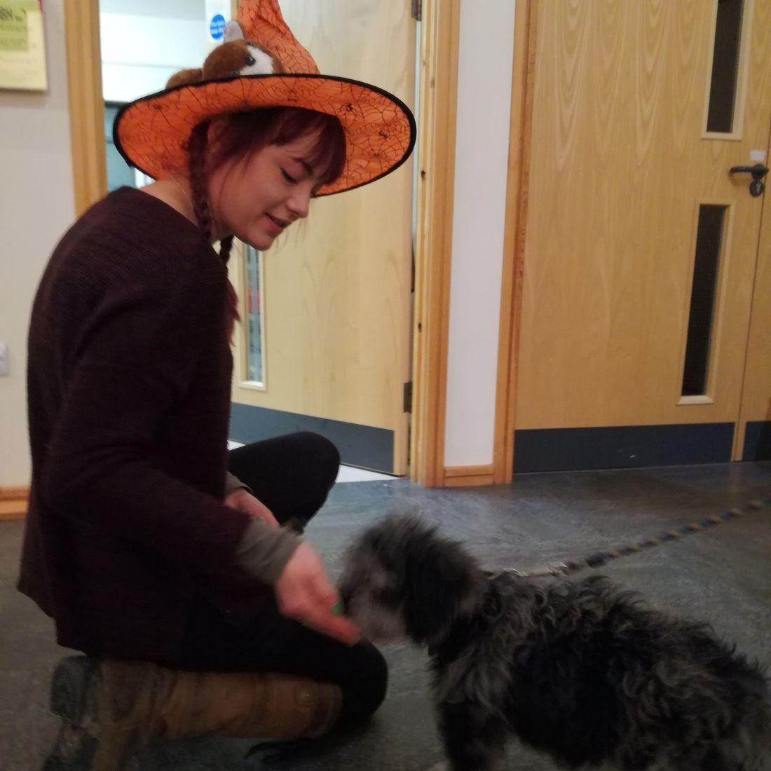 Horsham Dog and Puppy Training