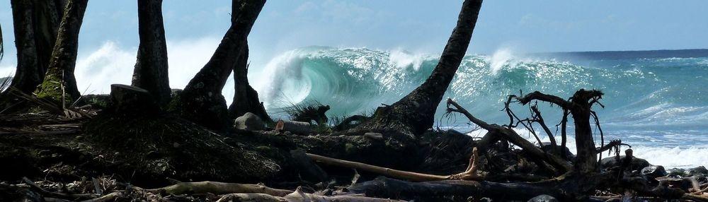 surf, martinique, spots de surf, école de surf