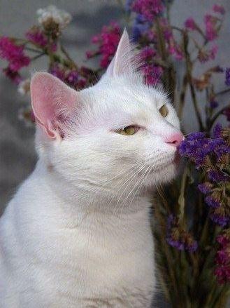 Essential oils safe for cats