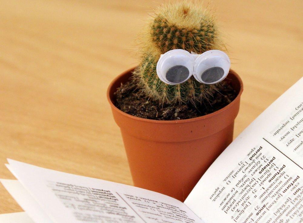 Een corrigerende cactus: illustratie bij proeflezen en redactie