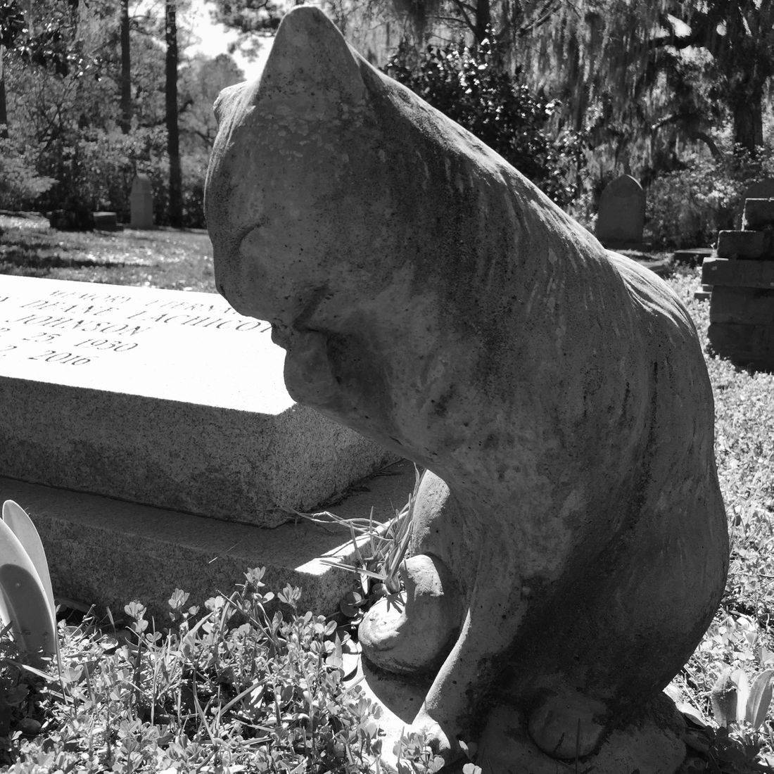 Gardens, Church, Cemetery, Pawleys Island, South Carolina, Cat, Headstone