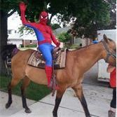 Spiderman character riding horse