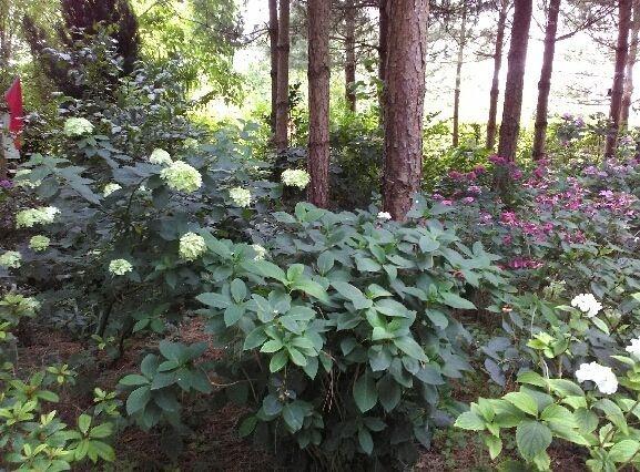 Gite nature du Tremblay en Touraine jardin de Mireile