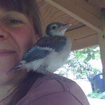 volunteer, wildlife, nature, birds, baby birds, blue jay, sandy bock