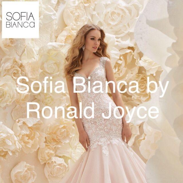 Sofia Bianca by Ronald Joyce
