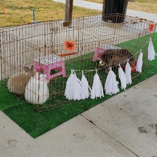 Cute bunnies in a pen