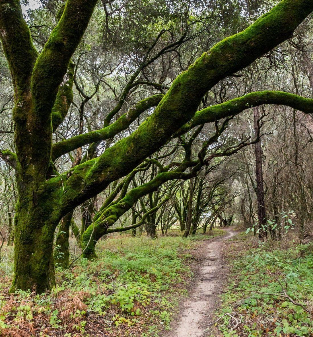 White Ladies Trail, White Ladies,