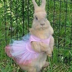 Bunny wearing a tutu
