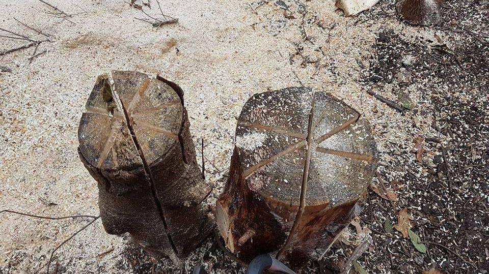 Stumps..