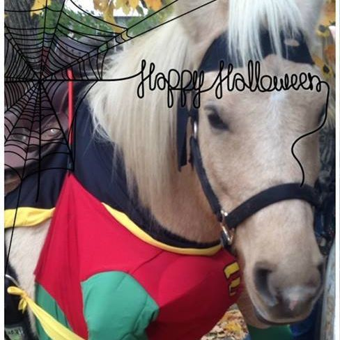 Horses dressed in Halloween costume