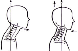 neutral neck position