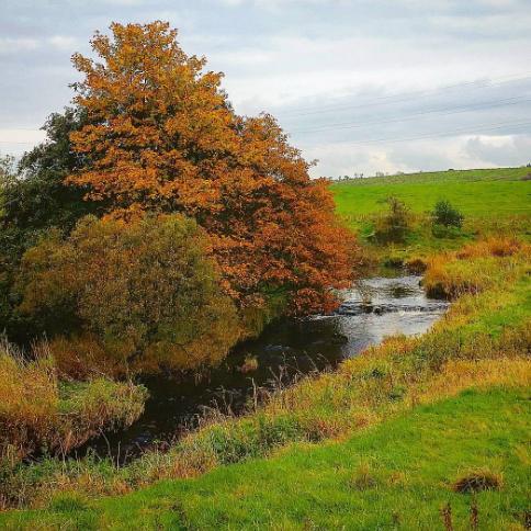 walton river trees angling
