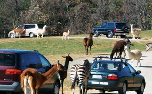 Longleat Safari Outdoor