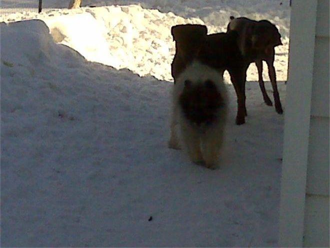 Mojo, Lola & Blu ~ Let's Run!
