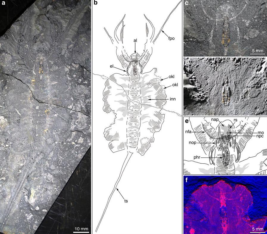 Des cerveaux fossilisés d'anciennes créatures marines découverts dans le nord du Groenland
