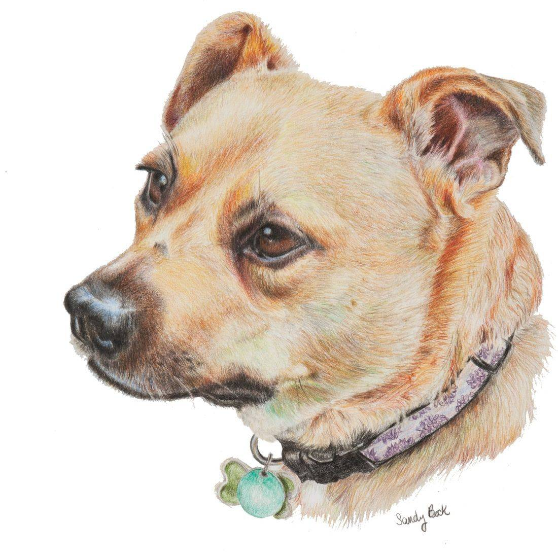 dog portrait, custom pet portrait, pet art, pet portrait, portrait